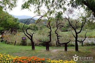 Trees with man and woman face are seen an ecological park on the Yeongsan River in Gwangju