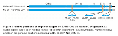 Relative positions of amplicon targets on SARS-CoV genome and wuhan-CoV genome